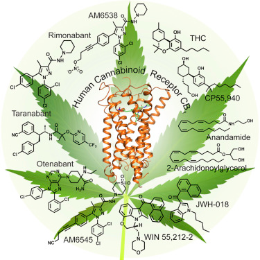 Cannabinoid Molecules - The core of cannabis based medicine