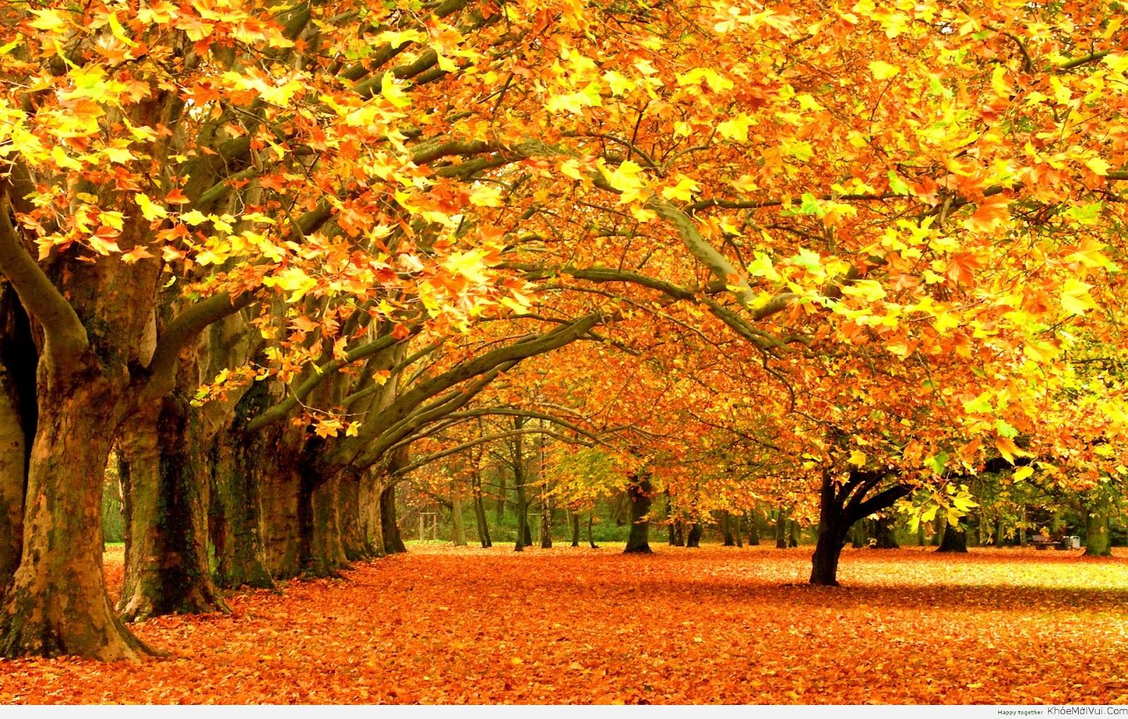 Mùa thu ở Đức khiến cho người ta hoài niệm về một thời xa xưa, bình yên