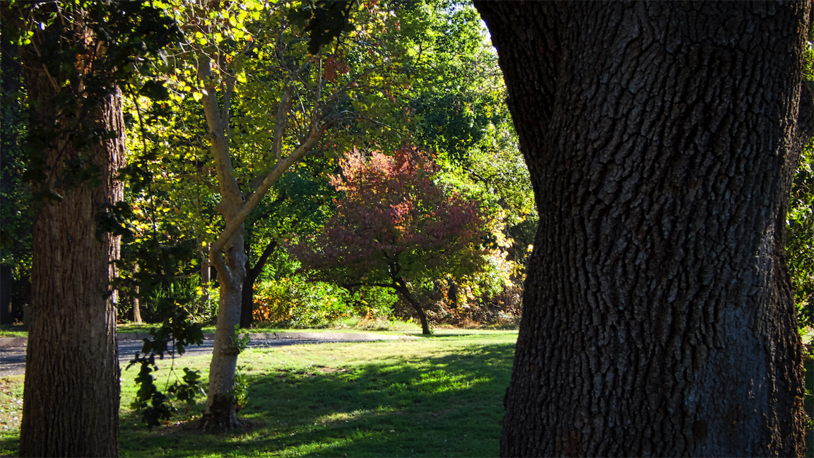 October at Caldwell Park.jpg