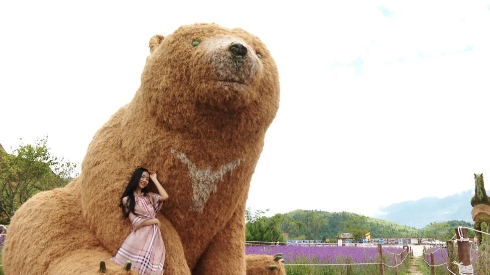 A picture containing animal, mammal, bear, grass  Description automatically generated