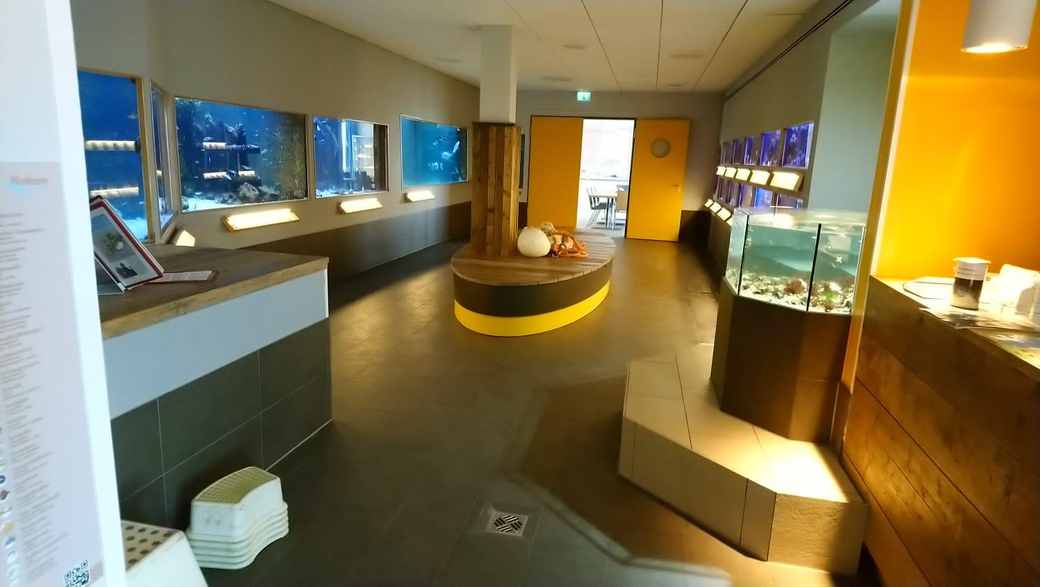Unterwasser Webcam für Livestreaming aus dem Aquarium und Tauchbecken.