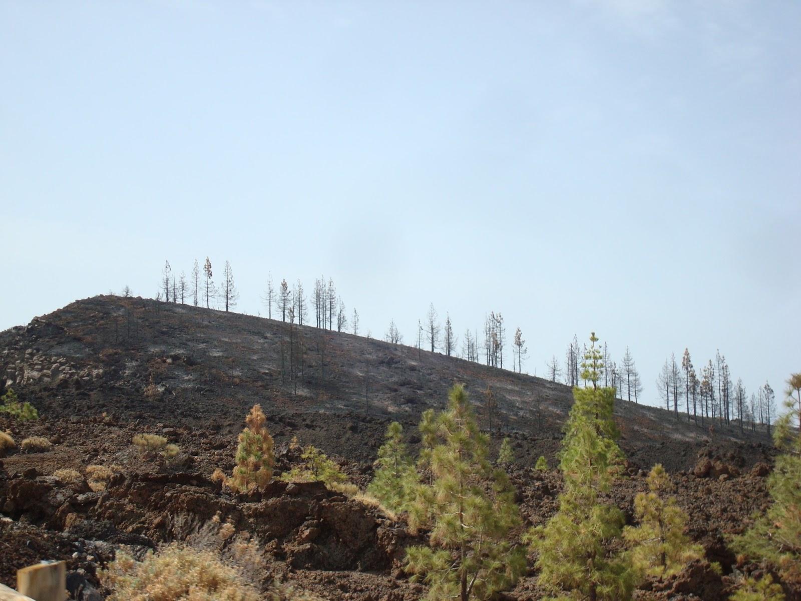 Imagen de un bosque incendiado con necesidad de restauración hidrológica-forestal