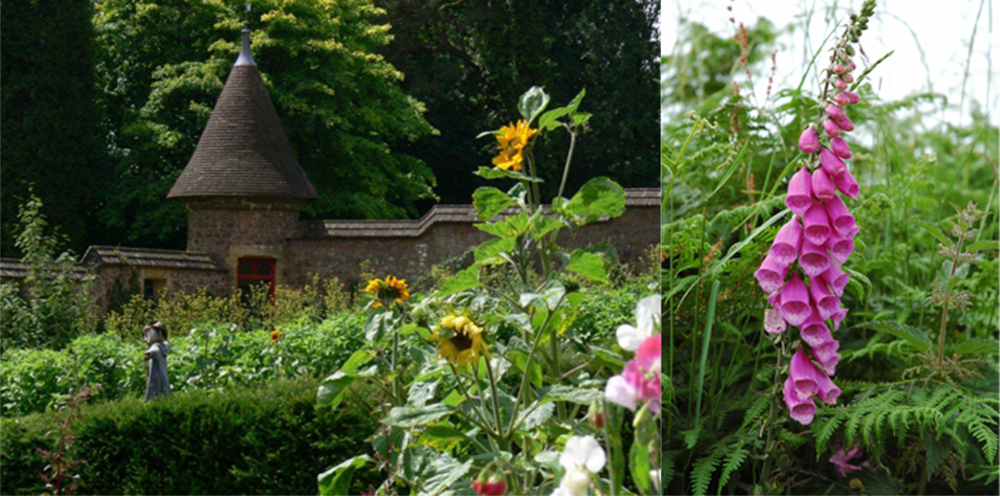 Explore the kitchen garden at Knightshayes while on holiday with the family in Devon.