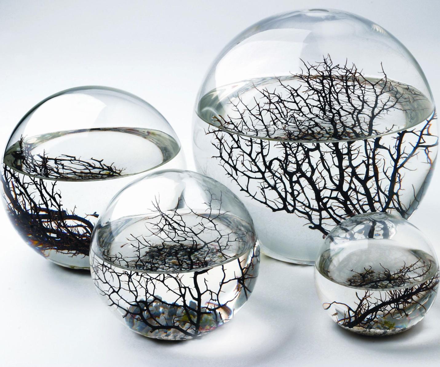 Self Sustaining Ecosphere | Ecosphere, Aquatic ecosystem, Ecosystems