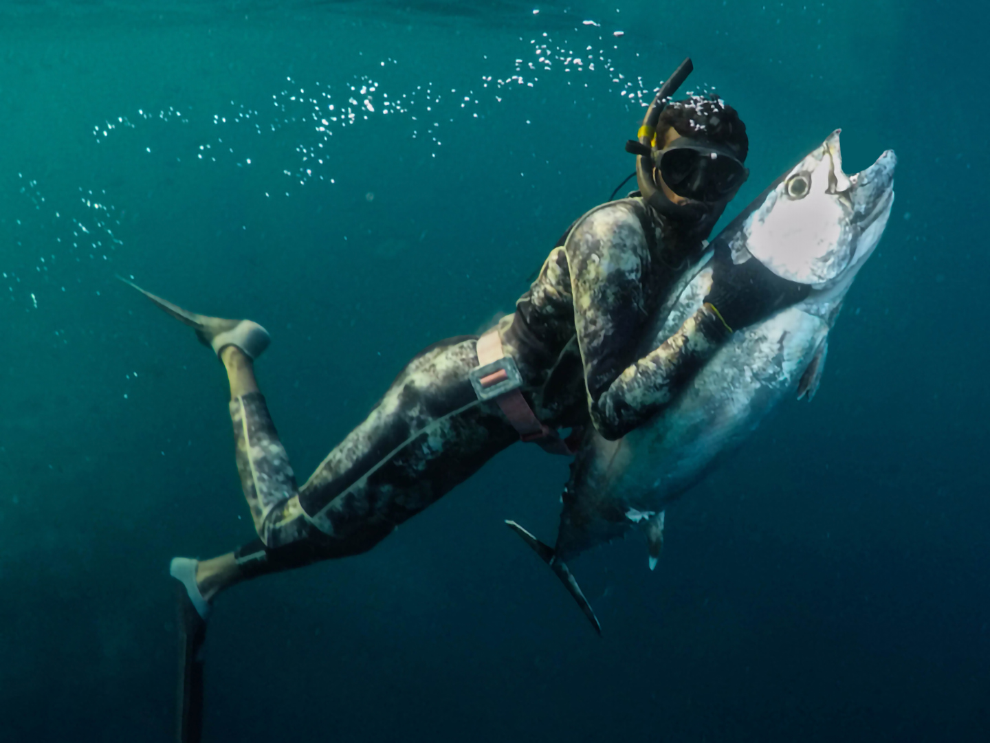 An underwater image of a diver with a Tuna after catching it with a spear