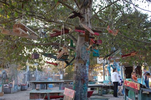 Plane Tree - Berkeley Adventure Playground