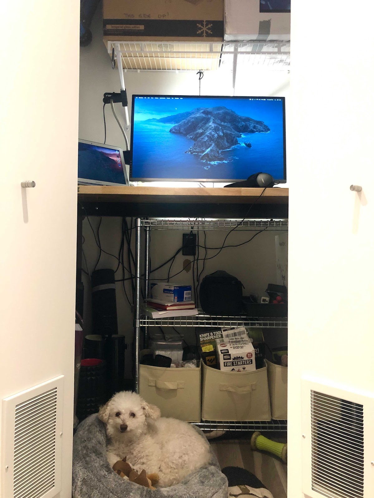 closet-office-with-dog