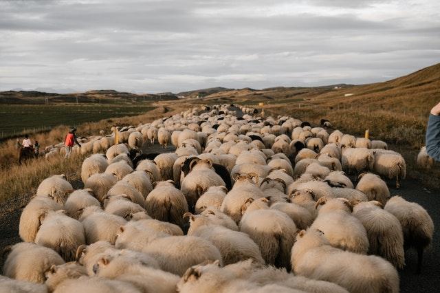 不要追隨羊群效應跟著別人的目標努力