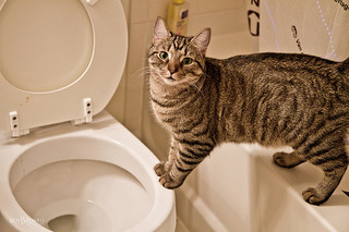 cat and toilet.jpg