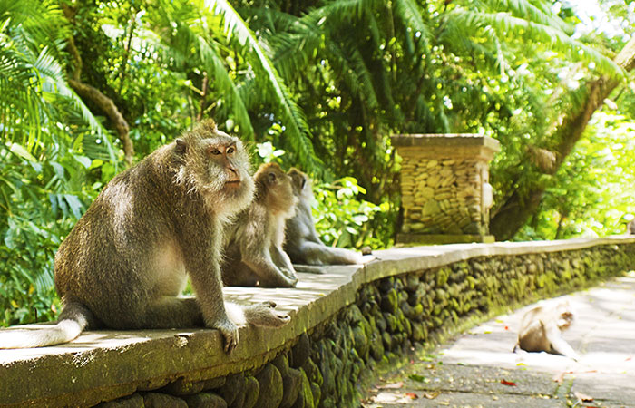 Image result for nanwan monkey island sanya