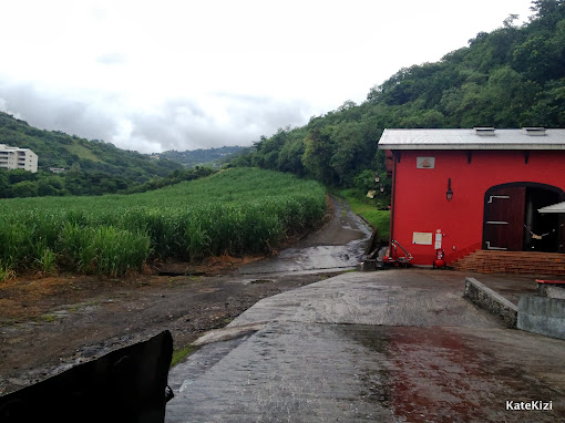 Слева - плантации сахарного тростника