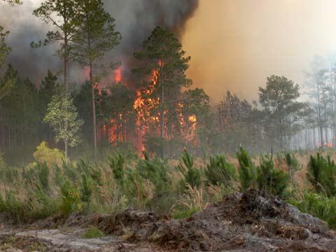 Kết quả hình ảnh cho công nghệ viễn thám trong phòng cháy rừng