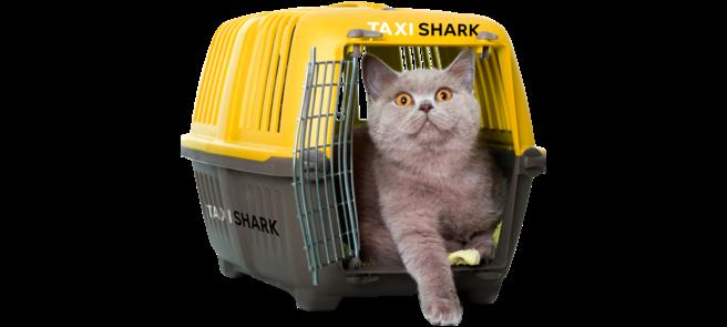 Услуги SHARK Taxi о которых вы не знали - Картинка 6