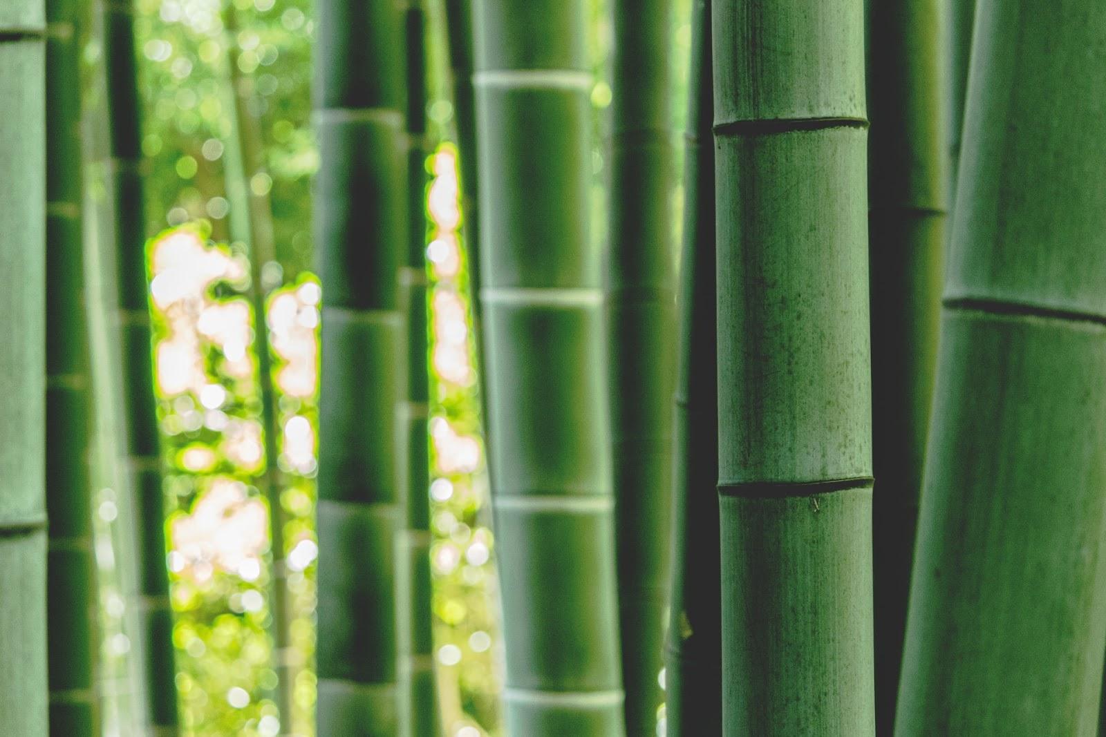 O cultivo de bambu não necessita do uso de agentes nocivos para o solo, como pesticidas ou herbicidas. Seu uso em papéis, móveis, materiais de construção, artesanato e outros o apresenta como uma ótima opção versátil. (Unsplash/Reprodução)