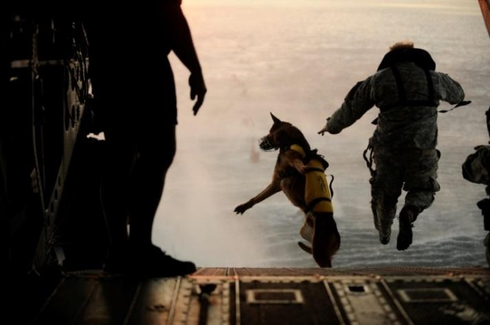 http://www.defense.gov/dodcmsshare/newsphoto/2011-03/hires_110301-F-RR679-717.jpg