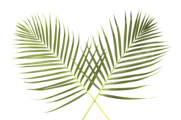 https://images.squarespace-cdn.com/content/57a8942059cc6810b824b08d/1553731265671-4SH0BJ94KKO9GEJUGIUF/palm-sunday-global.jpg?content-type=image%2Fjpeg