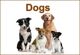 Image result for flashcards dogs