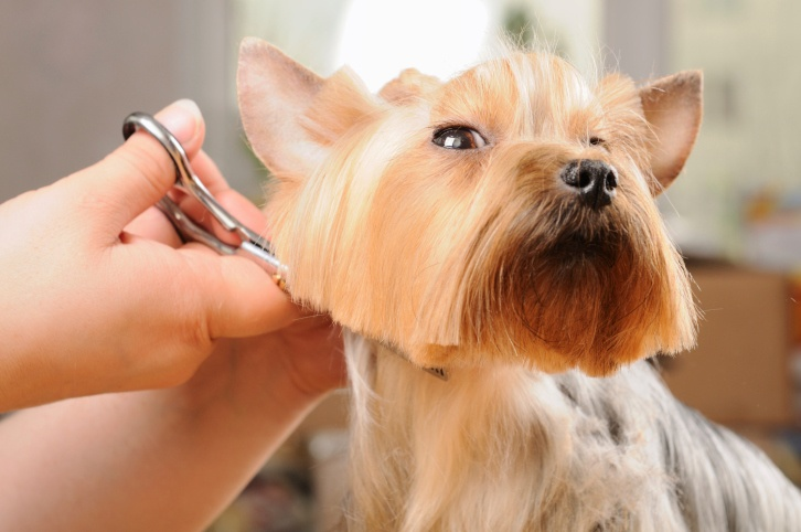 Image result for pet getting groomed
