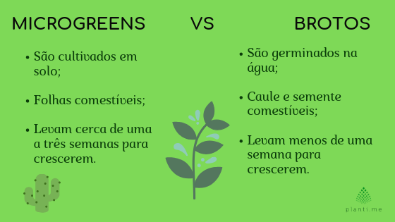 Microgreens e brotos comparativo