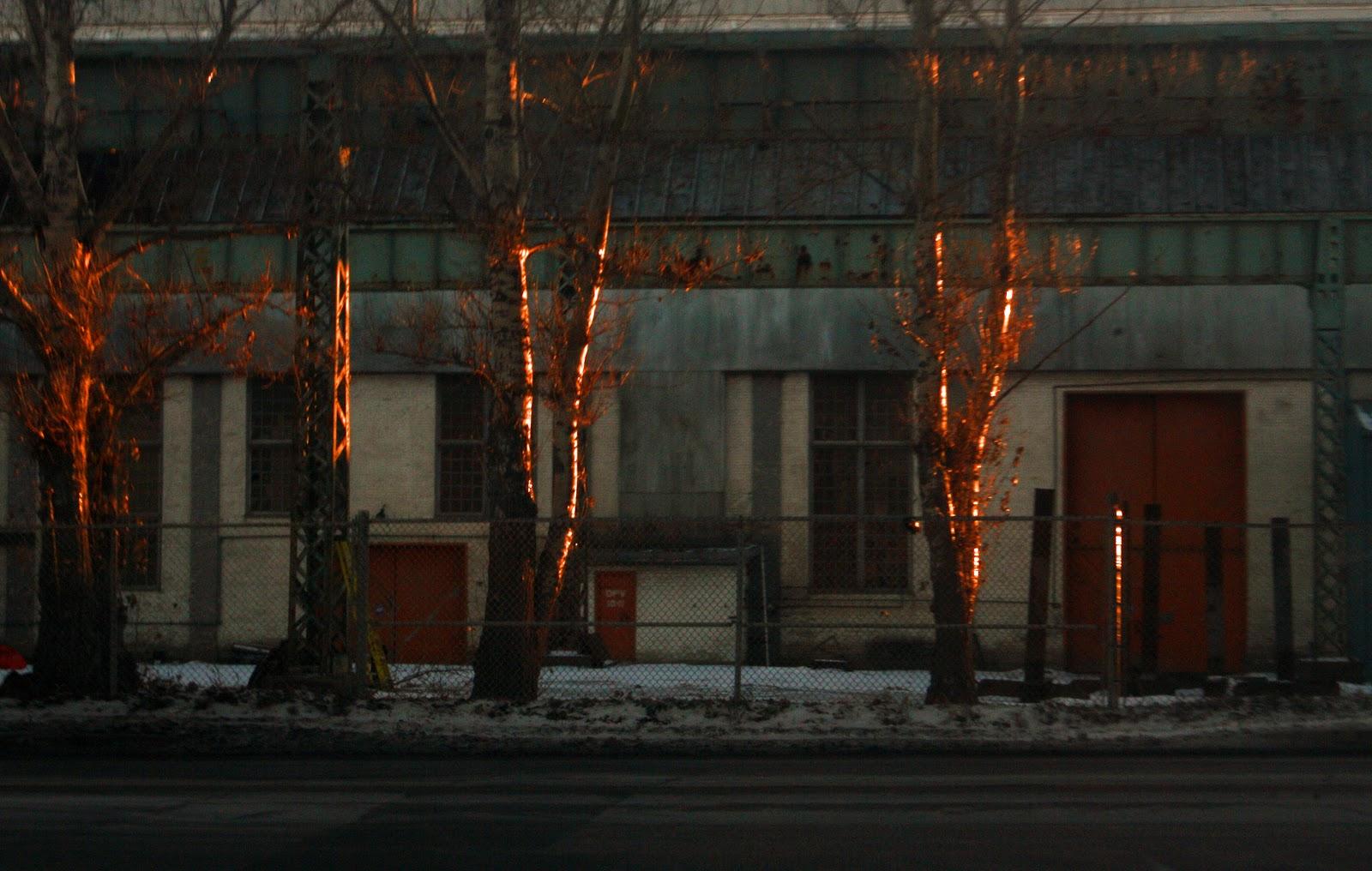 Amber trees.jpg