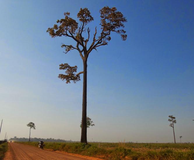 Brasil - Rota das Fronteiras  / Uma Saga pela Amazônia - Página 2 X1YEj38FjfaW5RcnQp-xCGfx8LYusbJihig7u9IeUhZJ=w666-h553-no