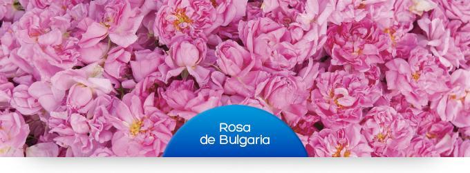 rosa Bulgaria_ESP