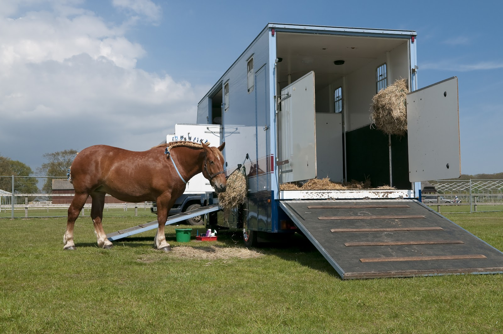 horse outside trailer