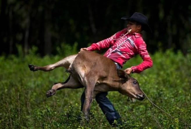 青年賣力參加牛仔競技(美聯社)