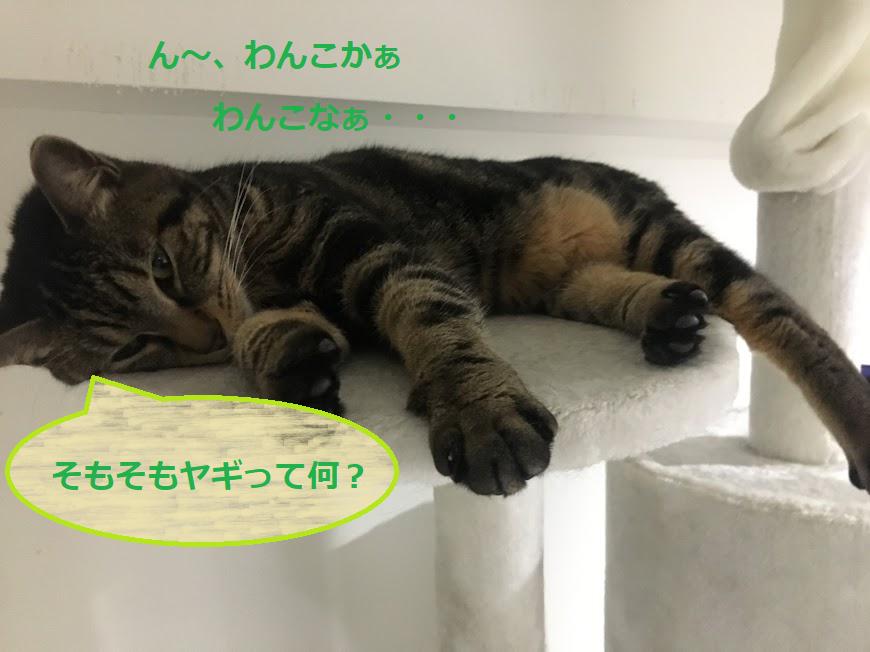 犬・猫・ペットと一緒に泊まれる北海道旅行!おすすめスポットは?