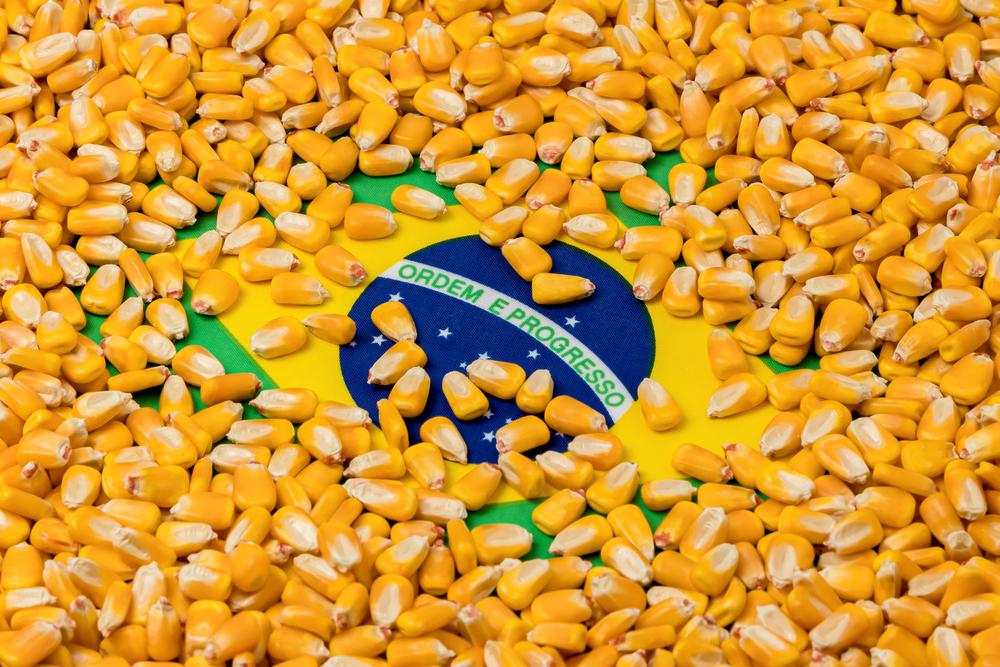 Exportação de milho de pipoca brasileiro para a Colômbia é uma das aberturas criadas. (Fonte: Shutterstock)