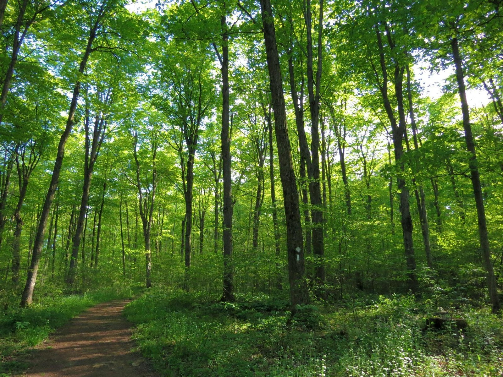The Bruce trail is one of the most famous long distance hiking trails in Canada