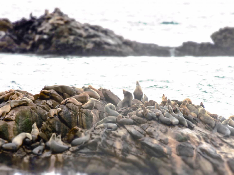Seals near Carmel