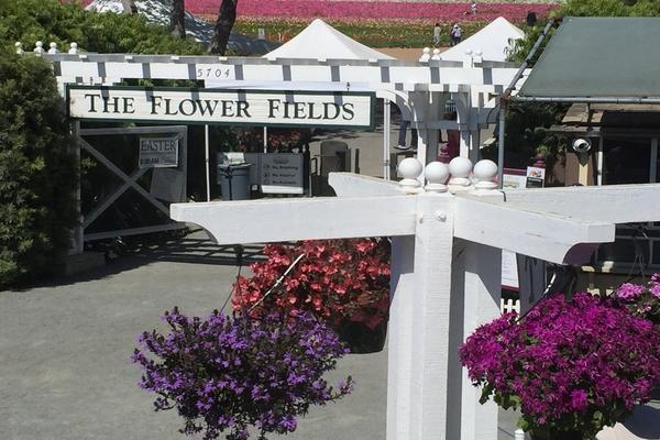 flower_fields_1.jpg