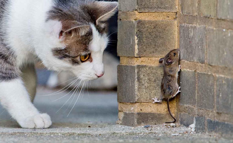 Кошки отличные охотники