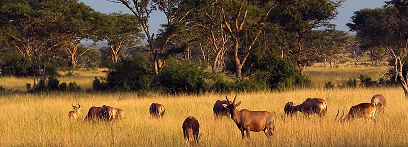 Image result for ANIMALS AT QUEEN ELIZABETH NATIONAL PARK