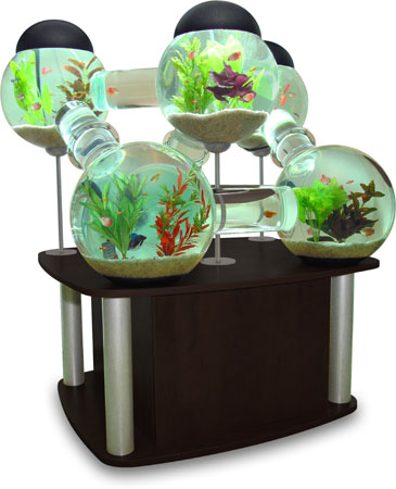 Dr cantamessa enrichment for captive species for Labyrinth fish tank