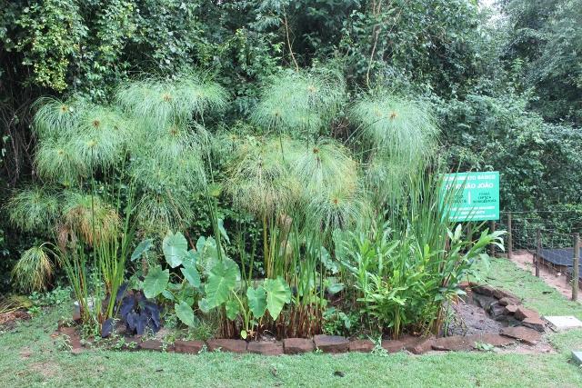 Exemplo de jardim filtrante da Embrapa (Fonte: Embrapa/Reprodução)jardim filtrante