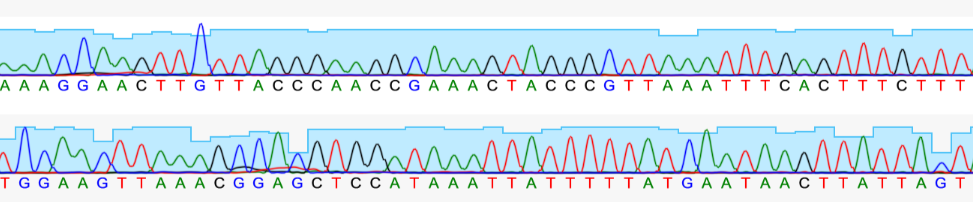 sanger sequencing chromatograms trace phred ab1 ngs antibody sequencing