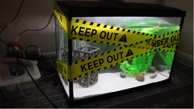 Fish tank with hazard tape