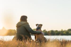 Hướng dẫn cơ bản về dầu CBD - CBD cho thú cưng?