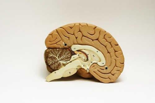 nguyên nhân gây teo não