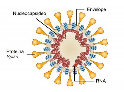 Ilustração do coronavírus.