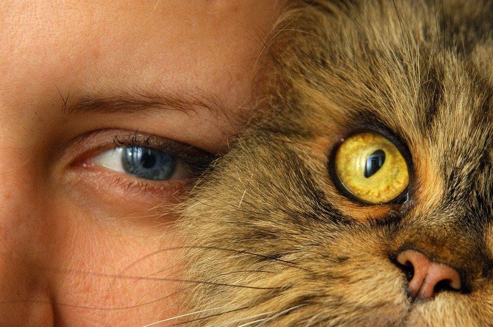 Cat, Person, Cat'S Eye, Closeup, Portrait, View