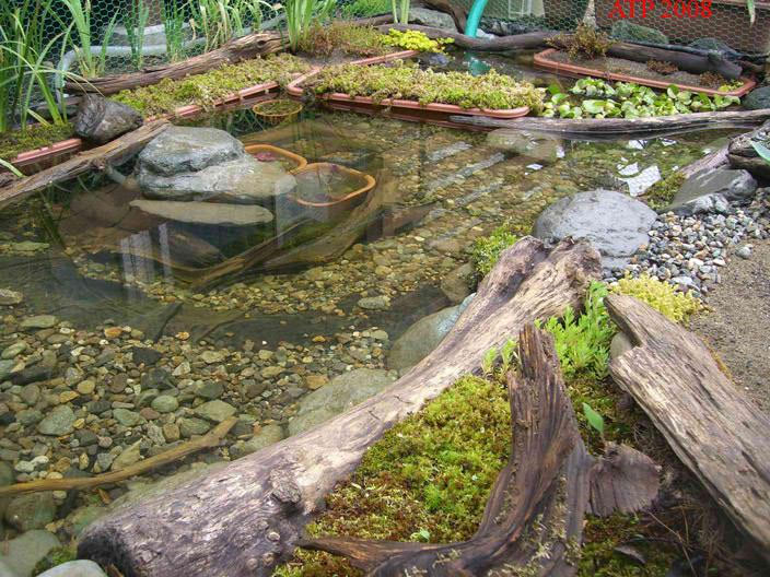 Resulta ng larawan para sa spotted turtle enclosure
