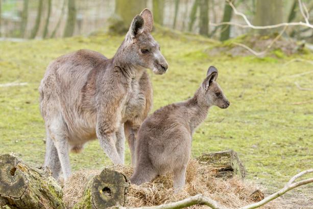 2020年 3~6個月遊學優惠方案!澳洲墨爾本gogoenglish