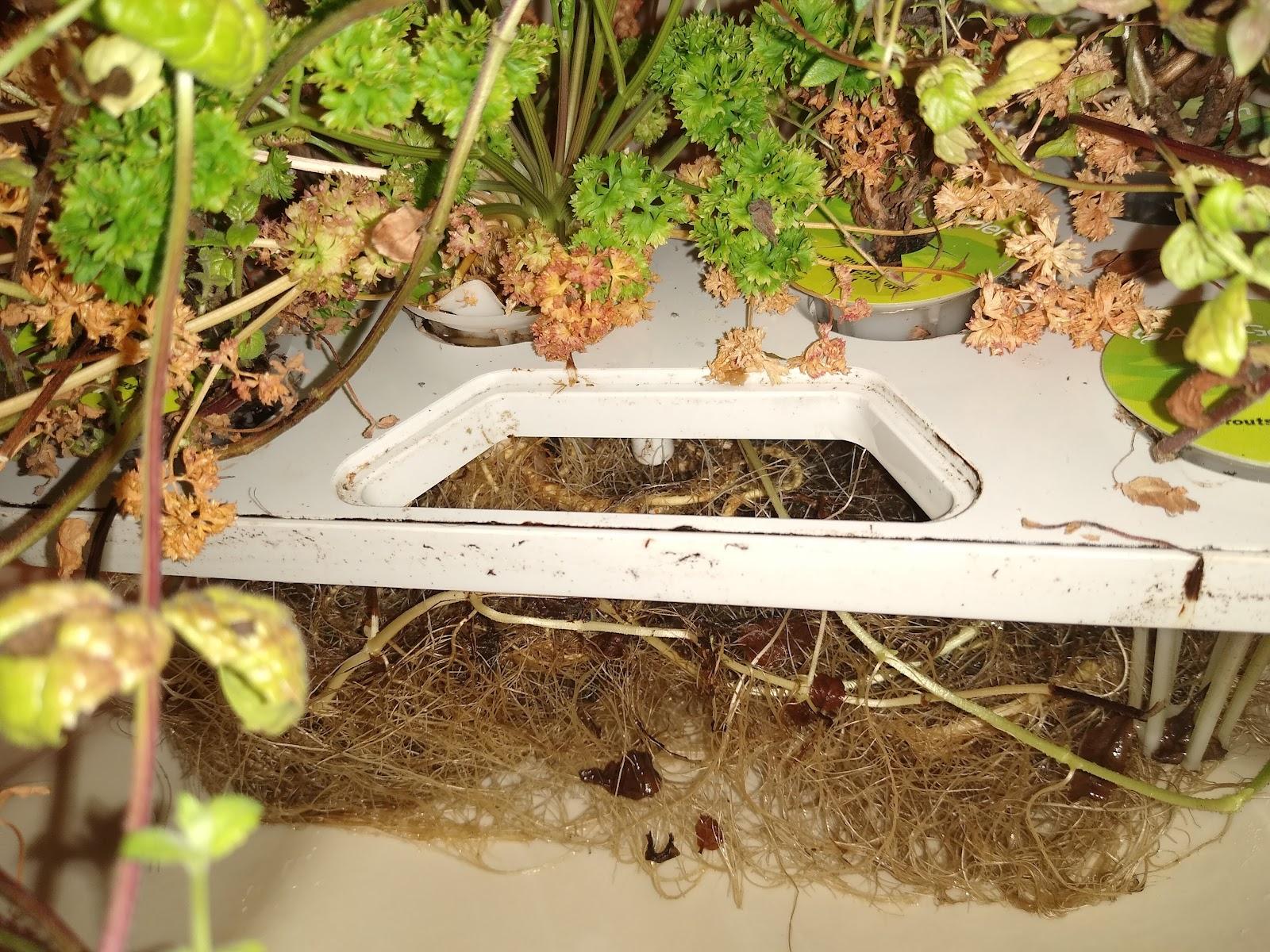 aerogarden plants & roots