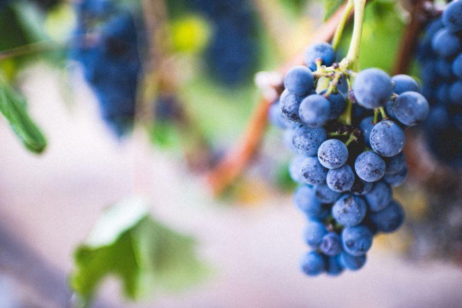 Organize By Grape