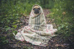 """A puppy inside a blanket. You'll feel wiser after you find the answer to the """"Why do I get sick when the weather changes?"""" question, just like this puppy."""
