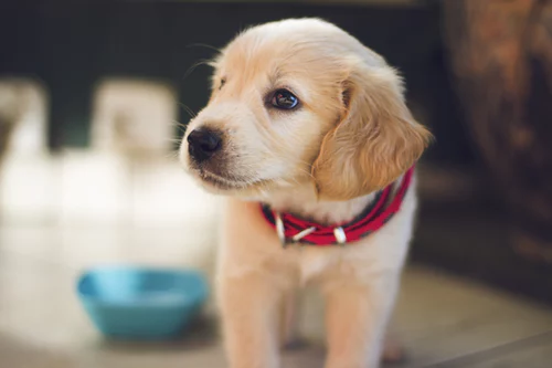 Puppy Separation Anxiety (A brief guide)