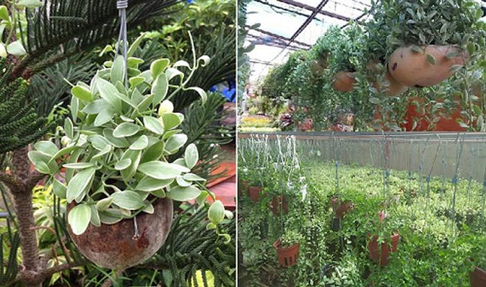 Nếu trồng với quy mô lớn thì bạn nên đầu tư hệ thống tưới tự động